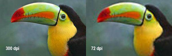 Imagem de um tucano para comparar resoluções DPI